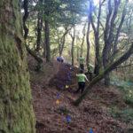 Sporbyggeri på skovens præmisser